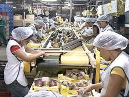 Resultado de imagem para exportação de frutos em petrolina e juazeiro