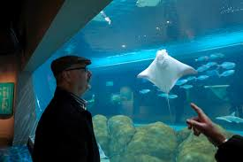 toledo zoo aquarium welcomes ors the blade