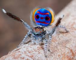 Risultati immagini per araignée