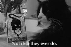 Henri le Chat Noir on Pinterest | Le Chat Noir, Cat Food and Cat via Relatably.com