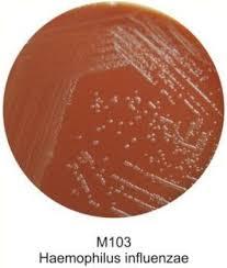 <b>Набор для приготовления шоколадного</b> агара (5 фл-100 мл ...
