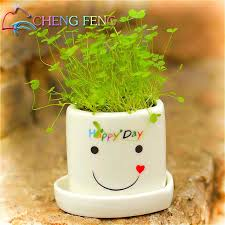 mini bonsai grass seeds 200bag easy to grow refreshing beauty office desk green potted beautifying office bonsai grass pots planters mini