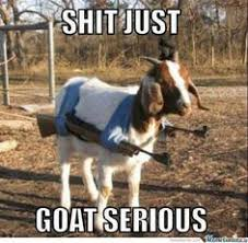 Goats are Funny, who Knew? on Pinterest | Goats, Funny Goats and ... via Relatably.com