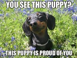 proud puppy - WeKnowMemes Generator via Relatably.com