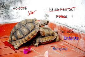 <b>French</b> slang: The everyday words they don't teach you at school ...