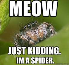 Misunderstood Spider | Know Your Meme via Relatably.com