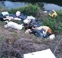 Recupero e smaltimento di carcasse di animali su strada ANAS