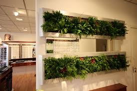 white kitchen windowed partition wall:  planted partition