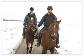 Pferd und Service - Aktuelles von Peter Swoboda