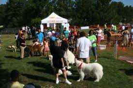 AKC Responsible Dog Ownership Days Returns For Its 17th Year ...