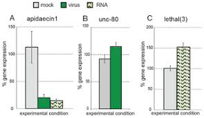 Non-Specific dsRNA-Mediated Antiviral Response in the Honey Bee