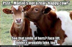 Cows on Pinterest   Funny Cows, Cow Pictures and Free Images via Relatably.com