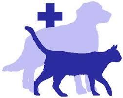 Bildergebnis für Tierarzt