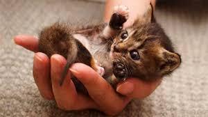 <b>Cute</b> is Not Enough - <b>Cute Cats</b> and Kittens Doing <b>Funny</b> Things ...