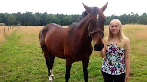 Image result for horse rider