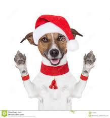 Cześć do widzenia wysoki pięć bożych narodzeń pies z łapami wysoki. - cześć-do-widzenia-boże-narodzenie-pies-27720875