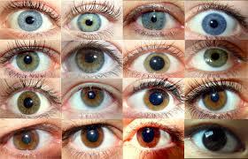Цвет <b>глаз</b> — Википедия