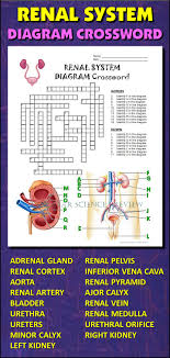 best images about nursing renal acute renal help students learn and remember the parts of the renal system using this diagram crossword