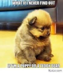 Animal memes on Pinterest | Funny Animal Memes, Funny Animal and Meme via Relatably.com