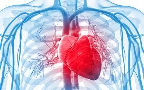 cardiovascular metabolic cardiovascular