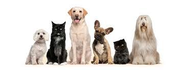 Resultado de imagen de veterinarios madrid