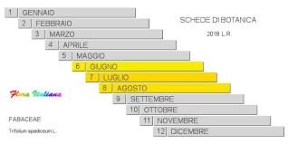 Trifolium spadiceum [Trifoglio spadiceo] - Flora Italiana