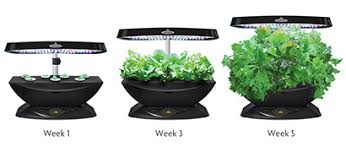Image result for indoor kitchen gardens