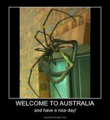 Welcome to Australia on Pinterest | Australia, Koalas and Toilets via Relatably.com