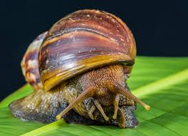 Image result for image of snail