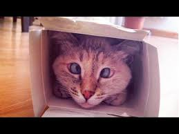 <b>Cross Eyed Cat</b> Is Adorable - YouTube