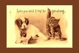 CAT AND DOG Quotes Like Success