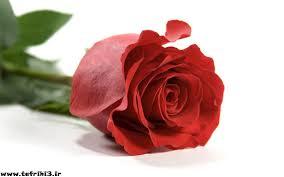 نتیجه تصویری برای عکس گل زیبا