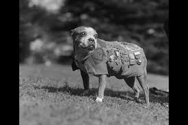 Image result for animal warfare world war 2