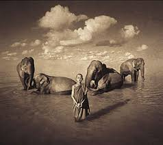Elephants with monks - Gregory Colbert