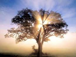 Resultado de imagen de arboles al amanecer