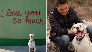 man turns grief over loss of his dog into healing message he s a man turns grief over loss of his dog into healing message he s a soul extension com