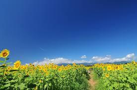 「夏空」の画像検索結果