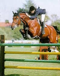 Resultado de imagen de equitacion