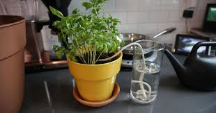 How to <b>water</b> your plants while you're away - CNET