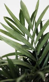 Motivation Monday <b>Series</b> | <b>Plants</b>, <b>Green plants</b>, <b>Plant</b> leaves