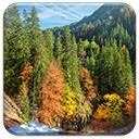 <b>Autumn Forest</b>