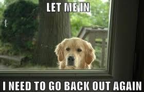 20 Hilarious Dog Memes via Relatably.com