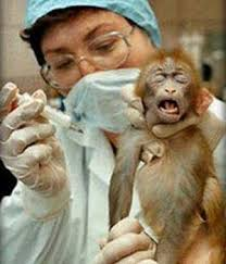 Animal Testing Is Bad Science  Point Counterpoint   Animals Used for Experimentation   The Issues   PETA Millicent Rogers Museum