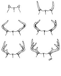 Field-Judging Live White-tailed <b>Bucks</b> & Does