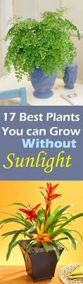 when you are looking for such plants choose that are known for their ability to grow best office plant no sunlight