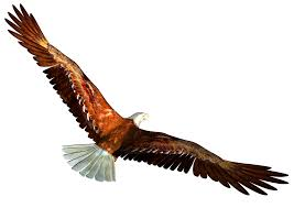 Image result for free image of an eagle