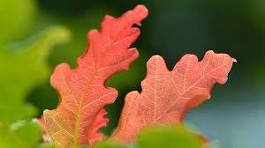 Why <b>autumn</b> leaves change colour and <b>fall off</b> - Woodland Trust