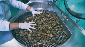 Demand for <b>natural</b> cosmetics drives <b>snail slime</b> boom in Italy ...