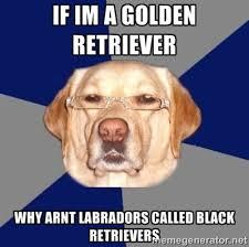 golden retriever meme by smoshlover6 on DeviantArt via Relatably.com
