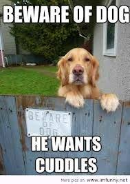 Funny dogs, funny dog pictures, funny dog quotes, humor dogs ... via Relatably.com